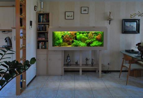 Consejos b sicos para tener un acuario en casa ibercan - Acuario en casa ...