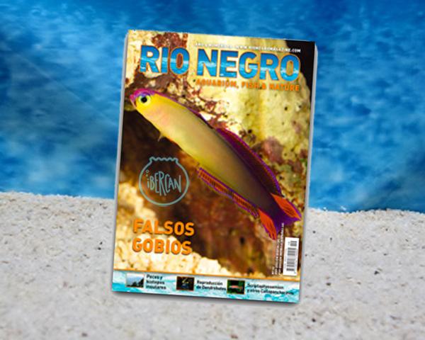 Revista Rio Negro nº19