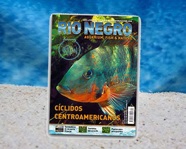 Revista Rio Negro nº20