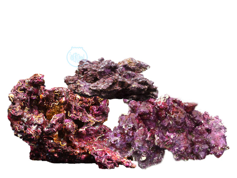 Real Coral Rock es una roca de arrecifes estándar.
