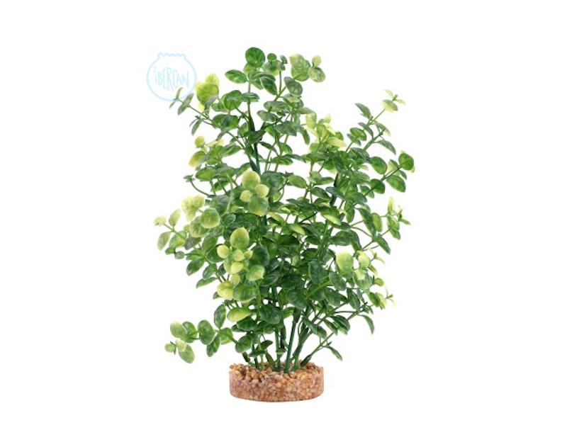 Réplicas de plantas de Fluval Bacopa Verde 20cm