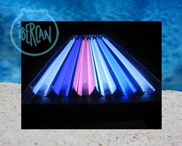 Tubos T5 de iluminación para acuario marino económicos -